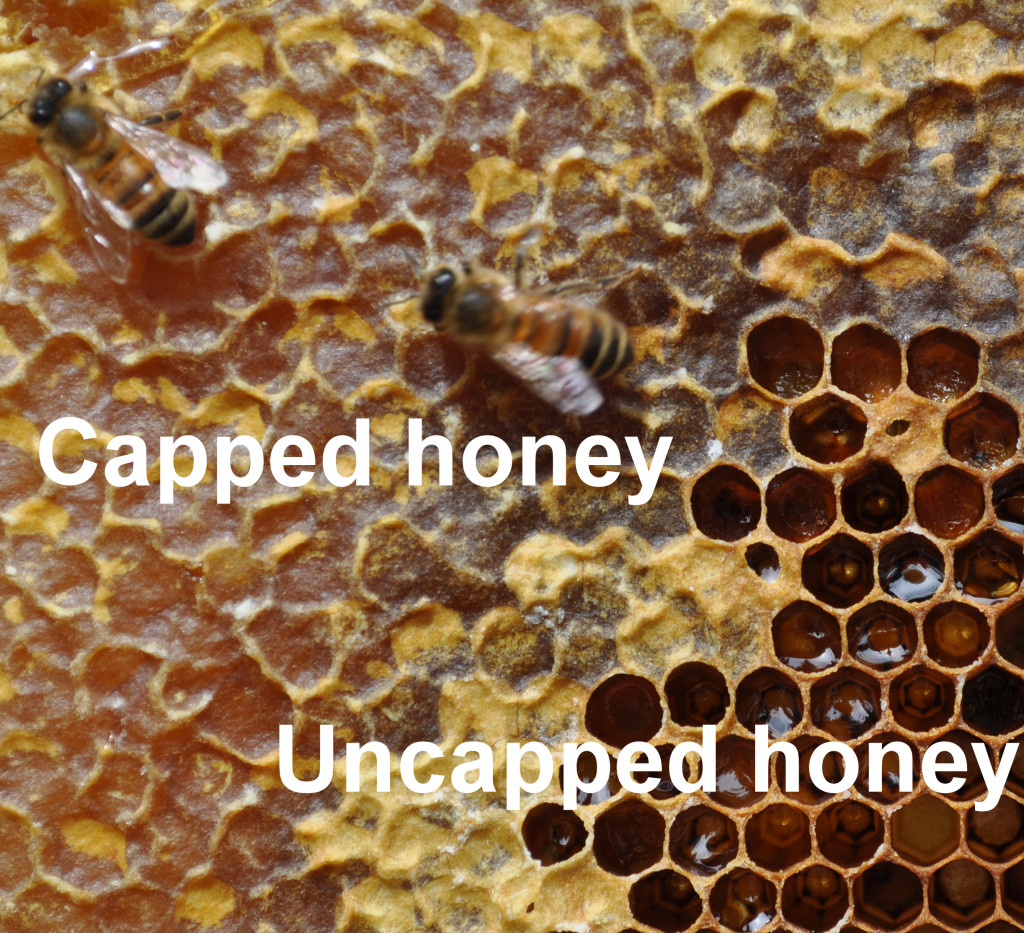 Capped & Uncapped Honey