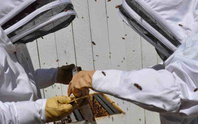 Urban Beekeeping Regulations