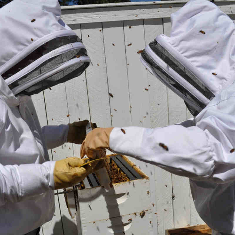Urban Beekeeping Regulations